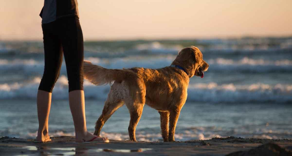 huisje aan zee met hond