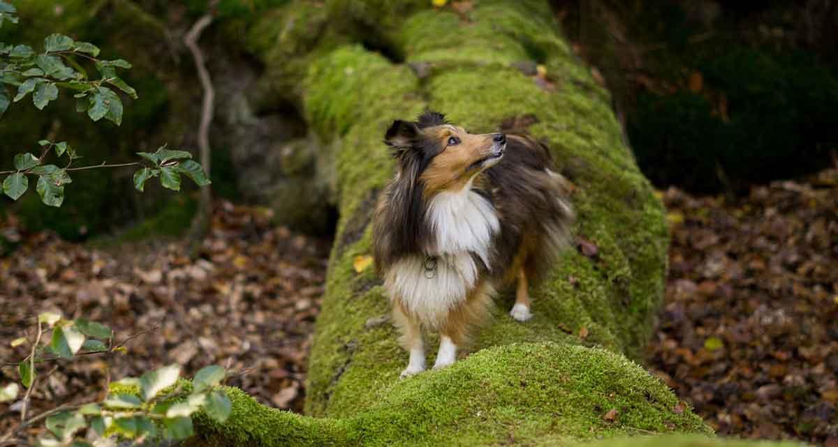 Weekendje weg met hond Duitsland