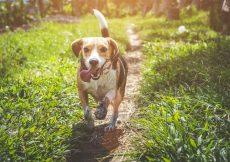 weekendje weg met de hond Veluwe