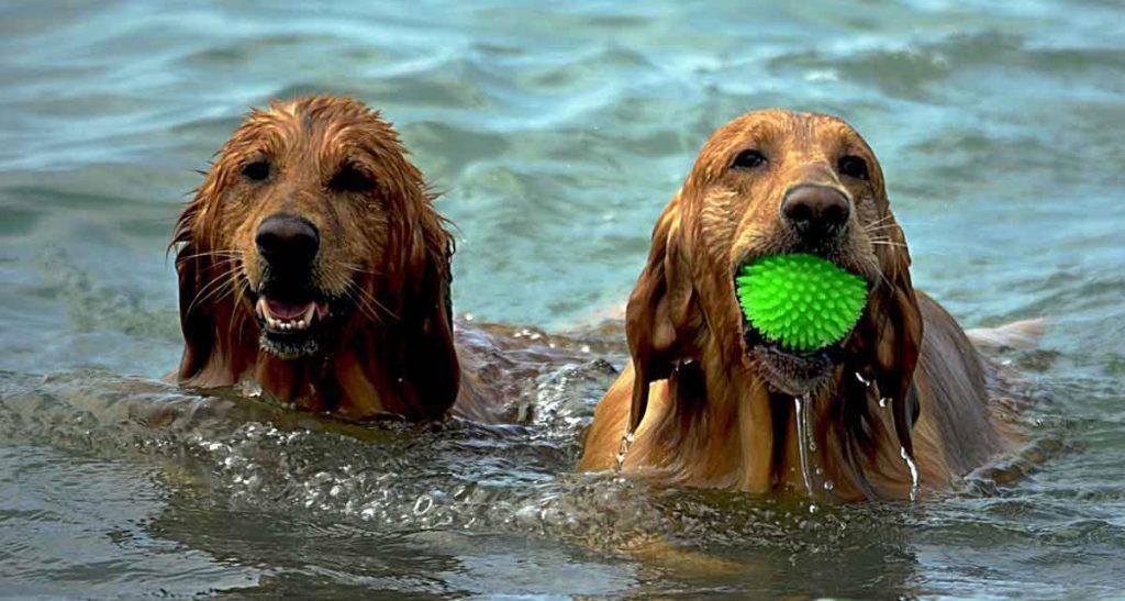 weekendje weg met hond aan zee