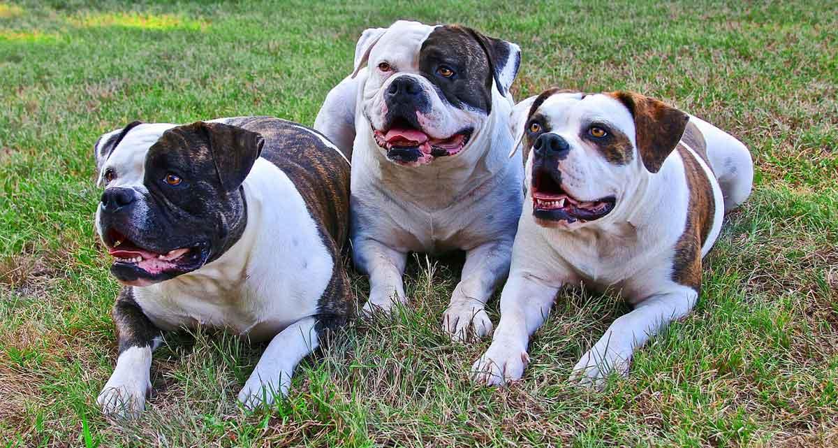weekendje weg met 3 honden