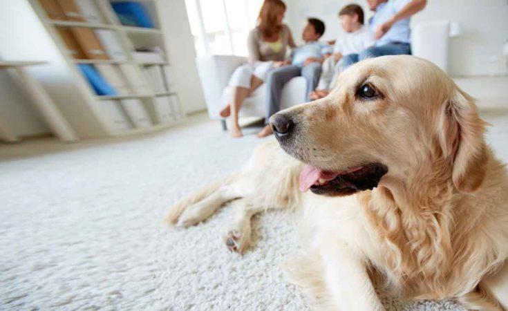 gezin met hond in een vakantiehuis