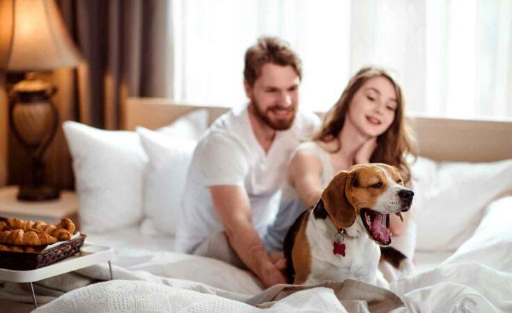weekendje weg met hond in een hotel