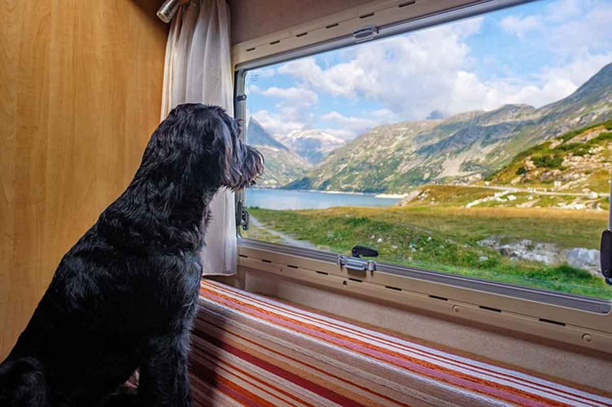 is jouw hond verzekerd op vakantie
